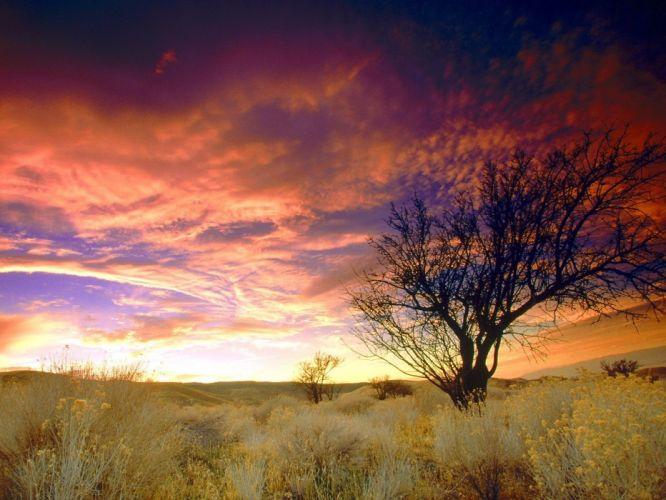 puesta sol contra nubes naturaleza arbol wallpaper