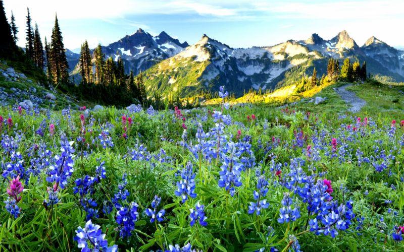 mountain flower Lovely Spring Landscape wallpaper