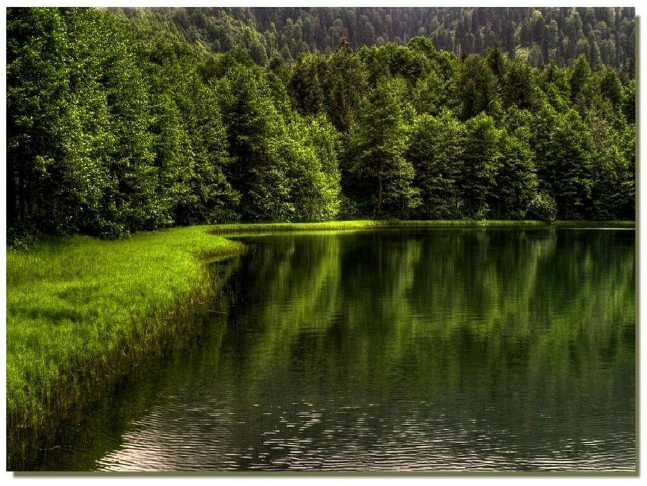 turkey artvin borcka lake green forest beauty tree wallpaper