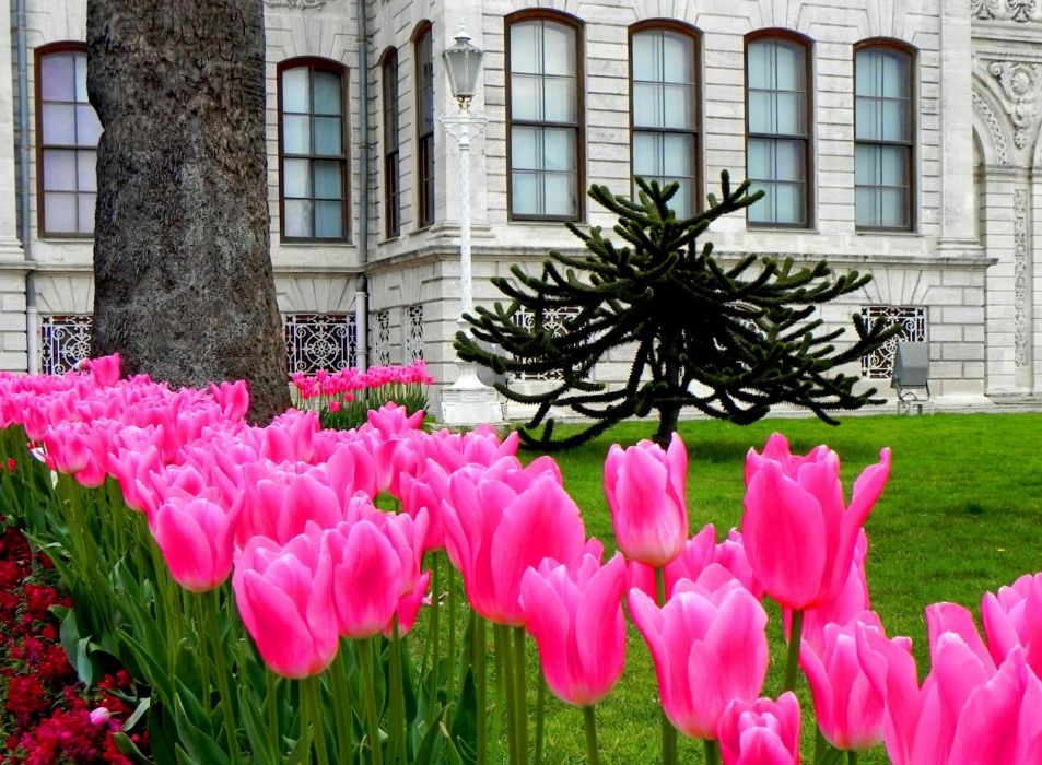 dolmabahce garden istanbul lovely castle carpet nice grass beautiful tulips istanbul turkey colorful palace pretty park nature tree garden pink alley fresh summer wallpaper