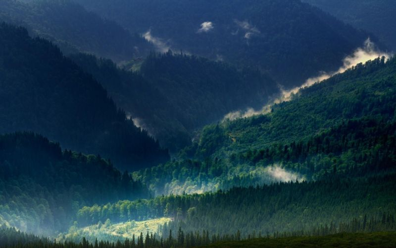 landscape nature carpathians mountain mist forest spring green trees wallpaper