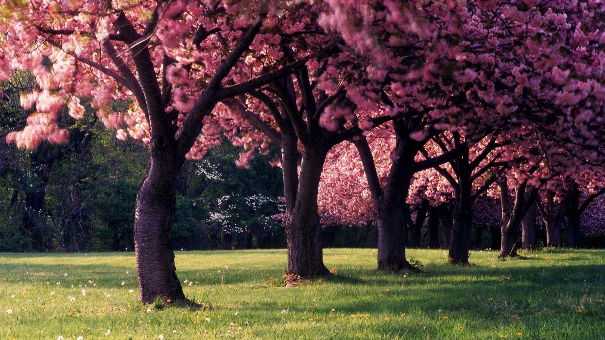 spring trees nature dandelion landscape seasons depth of field photography wallpaper