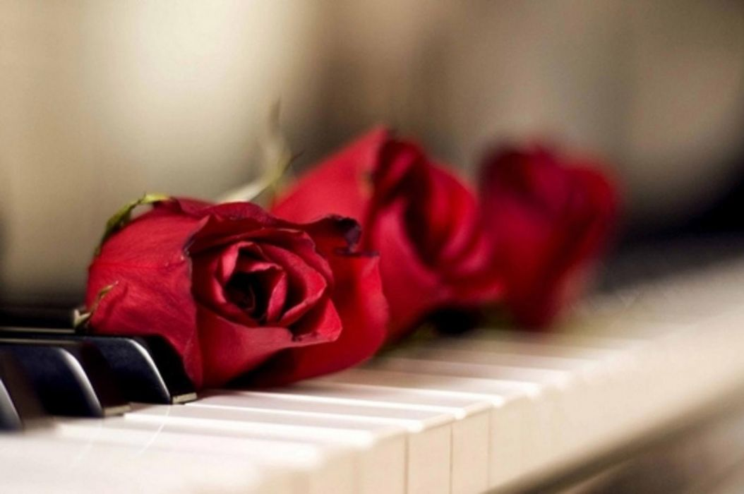 roses passion romance love piano red roses music special wallpaper