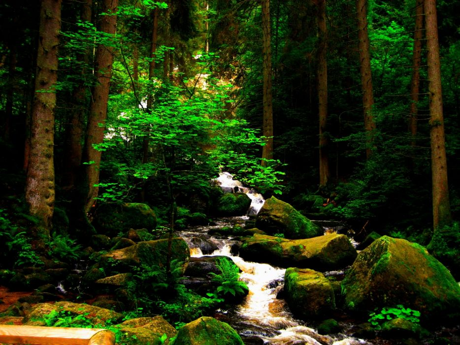 brook forests moss nature trees wallpaper