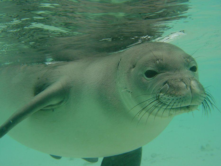 foca mamifero animales agua wallpaper
