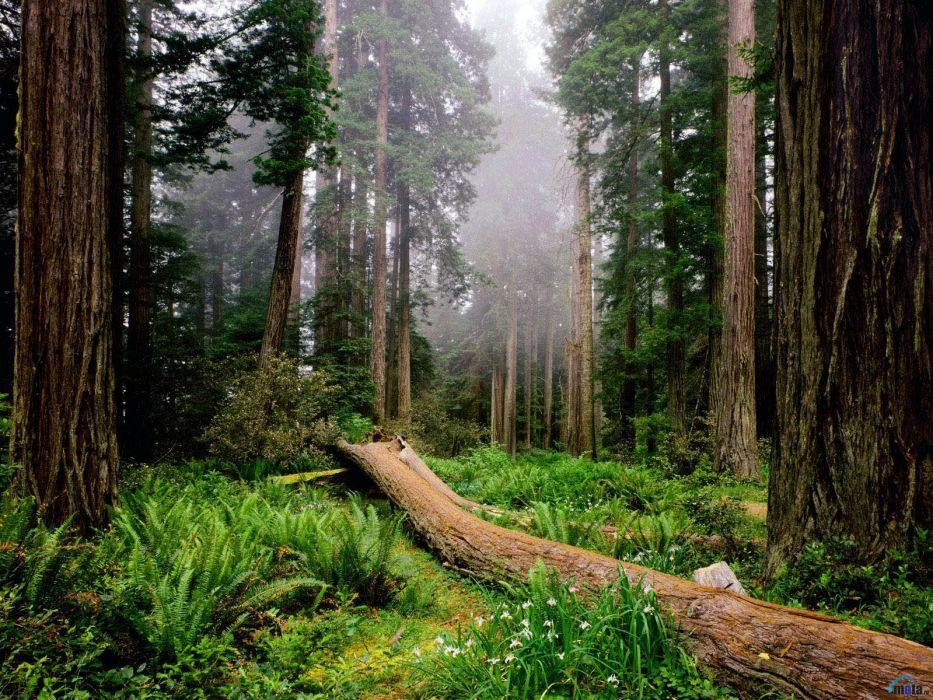 Resultado de imagen para bosques templados
