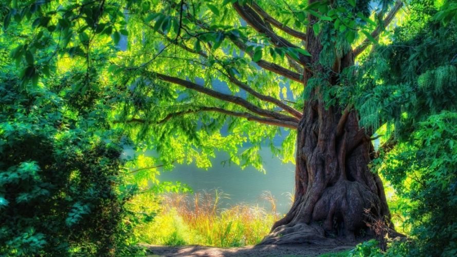 Photography nature-big-tree wallpaper