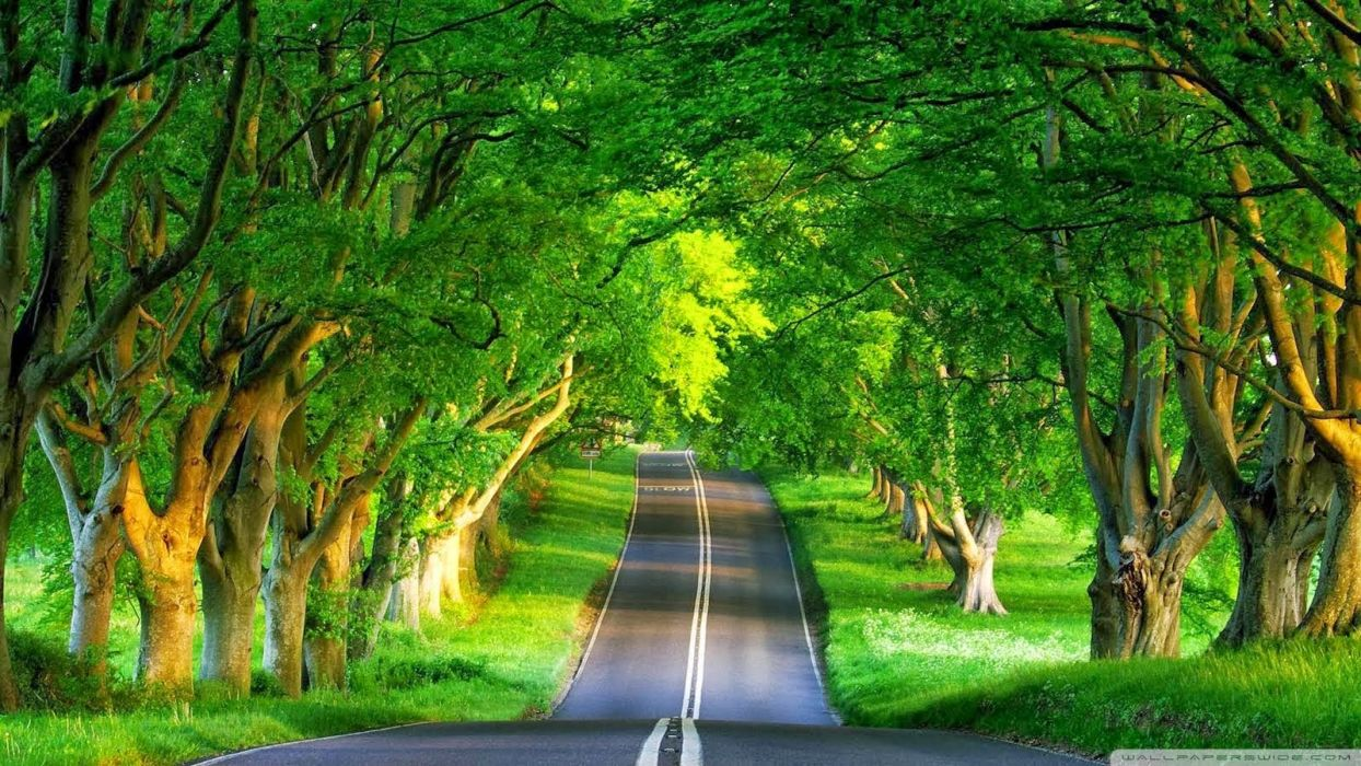 Photography nature-picture-road-trees wallpaper