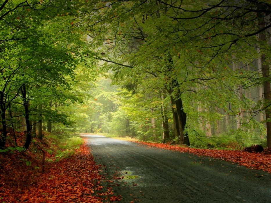 Photography nature-road-trees wallpaper