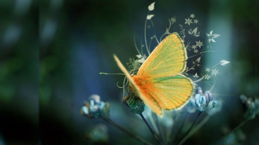 Photography nature-butterfly- wallpaper
