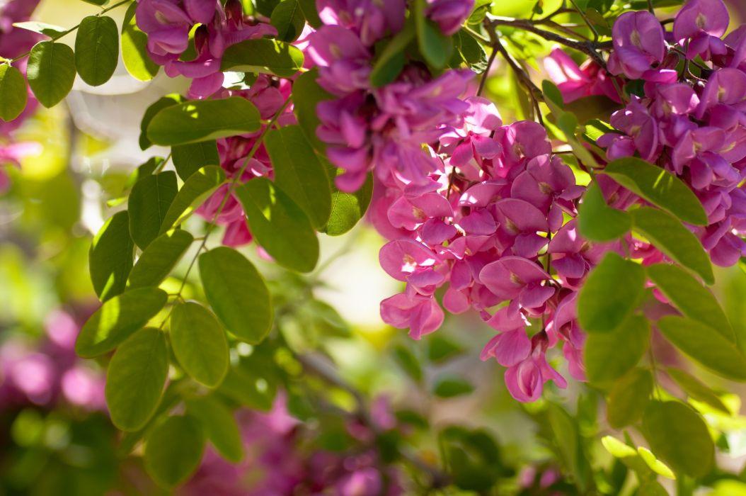 beautiful flower pink nature wallpaper