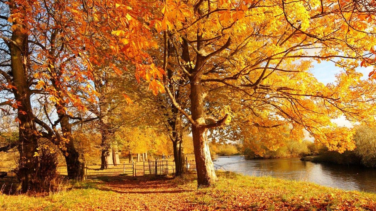 river autumn tree lake beauty nature wallpaper