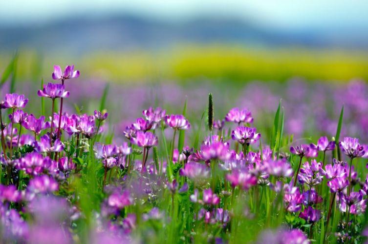 Meadow Flowers Field Polne Kwiat Kwiaty Natura wallpaper