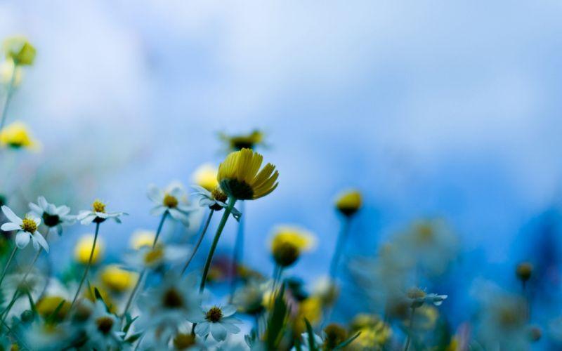 Meadow Flowers wallpaper
