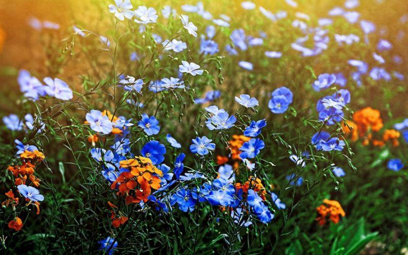 Wild Flowers Meadow wallpaper