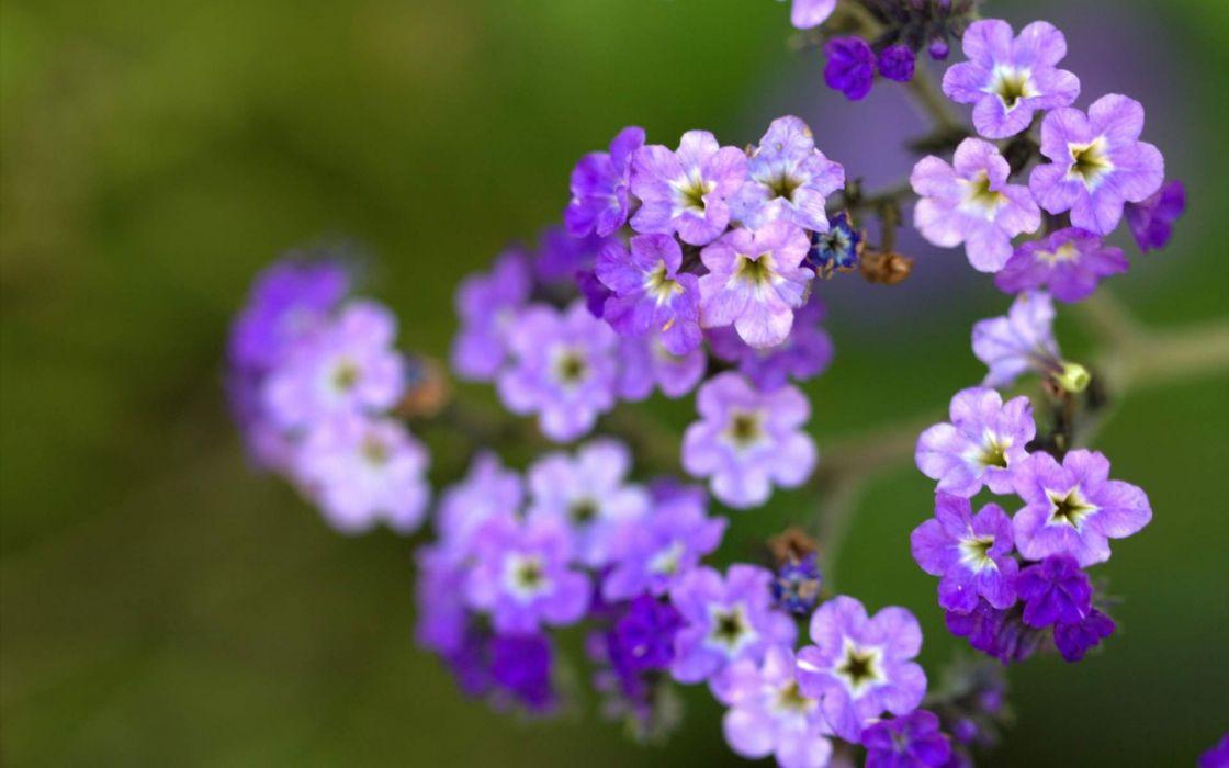 Little purple flowers wallpaper 1920x1200 1083920 wallpaperup little purple flowers wallpaper mightylinksfo