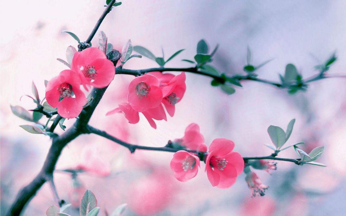 Red Blossom Flowers Branch wallpaper