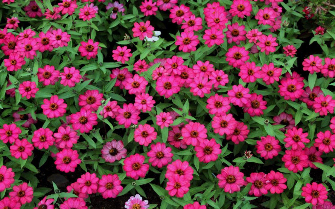 Little flowers wallpaper 2560x1600 1083923 wallpaperup little flowers wallpaper mightylinksfo