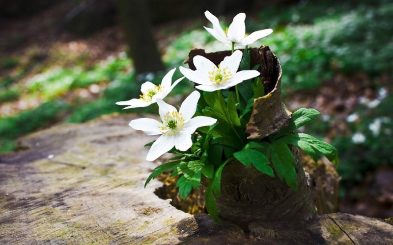 White Wild Flowers wallpaper