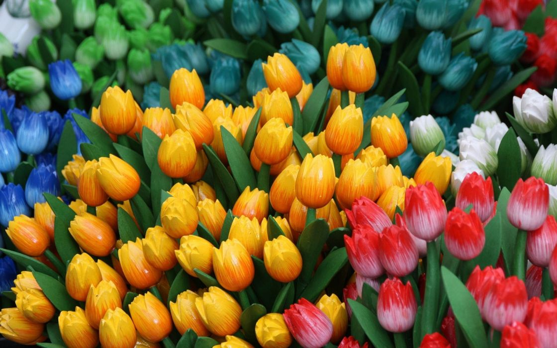 Colorful Tulip Flowers wallpaper