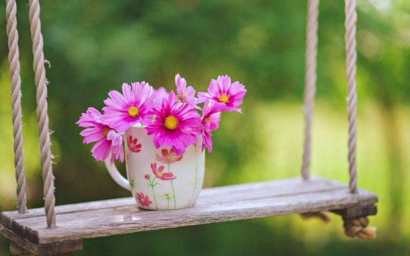 Cup Flower On Swing wallpaper