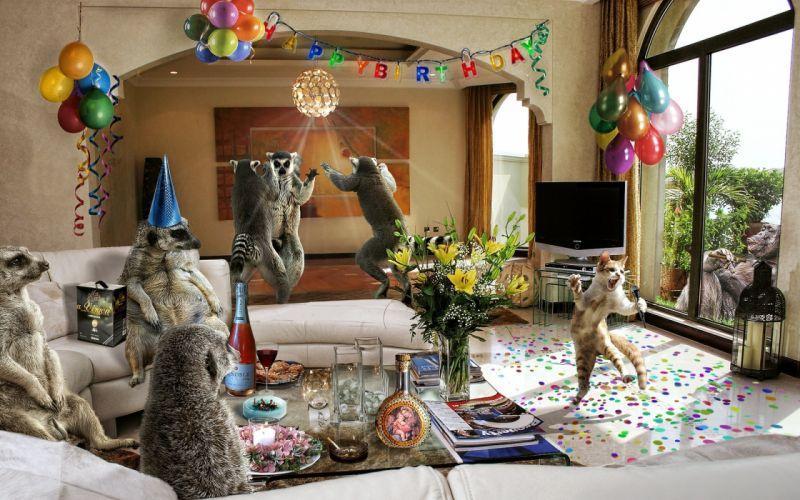 abstracto humor animales celebracion cumpleay wallpaper