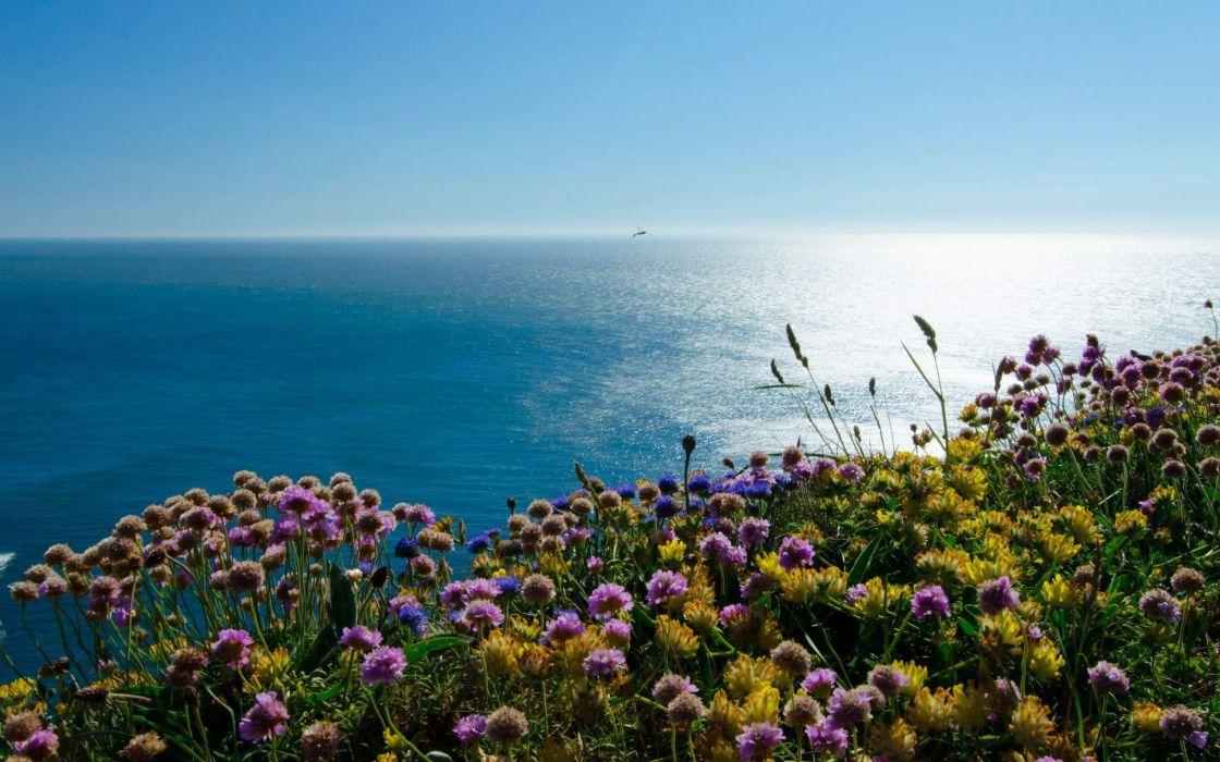 Beach Flowers Blue Sea Landscape wallpaper