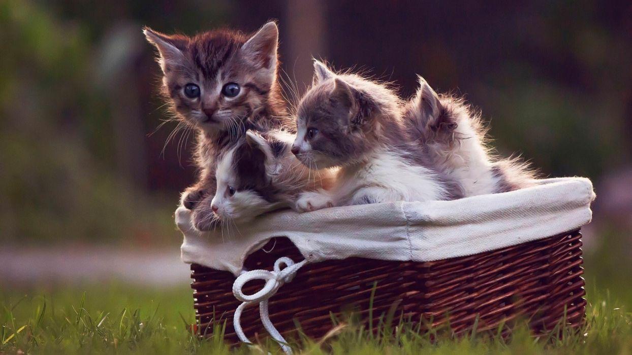 Cute cat babies beautiful wallpaper
