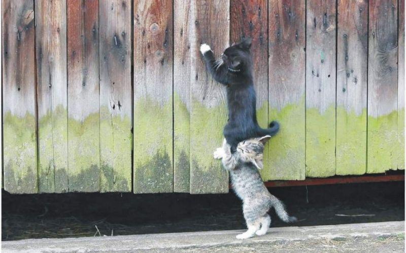 Cute cats helping unny wallpaper