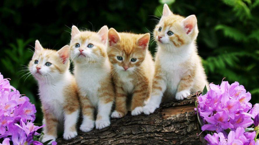 cute cats animal wallpaper