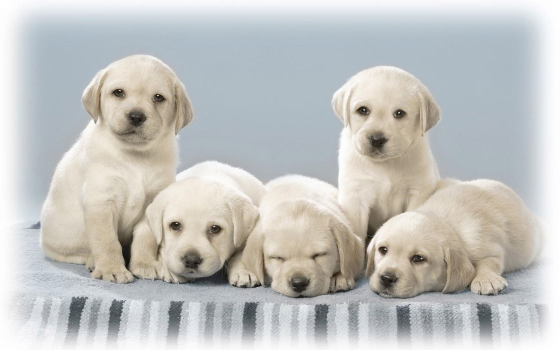 Cute Dog Puppies Sleep On Blanket And Well Design Border Wallpaper 1920x1200 1084419 Wallpaperup