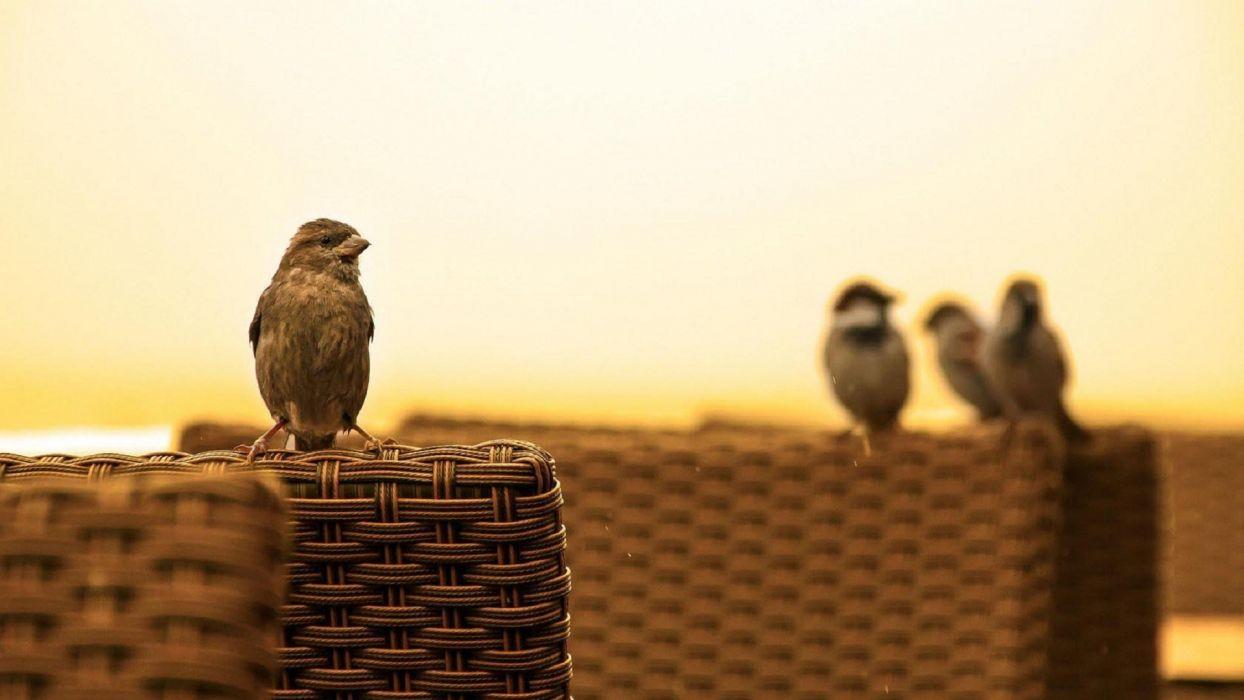 Cute sparrow bird wonderful wallpaper
