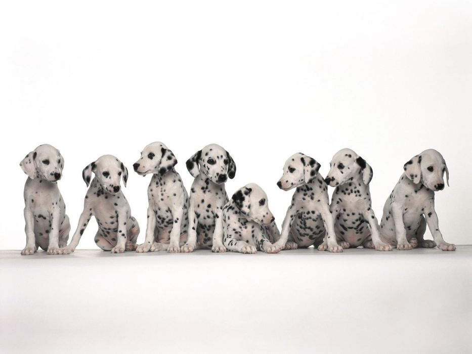 Cute small puppies most beautiful wallpaper