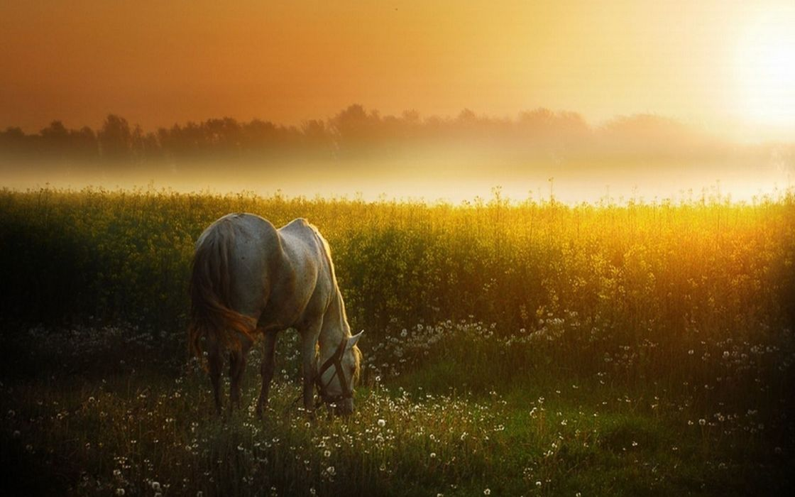 Cattle grassing horse sunset wallpaper