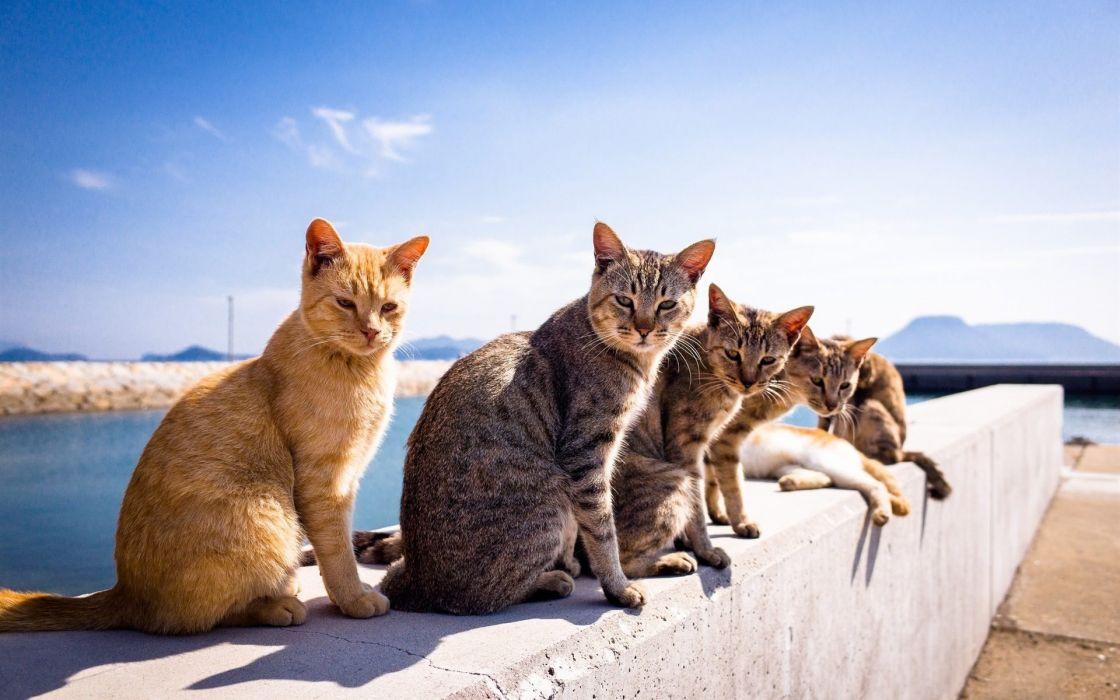 Beautiful cats row at the lake wallpaper