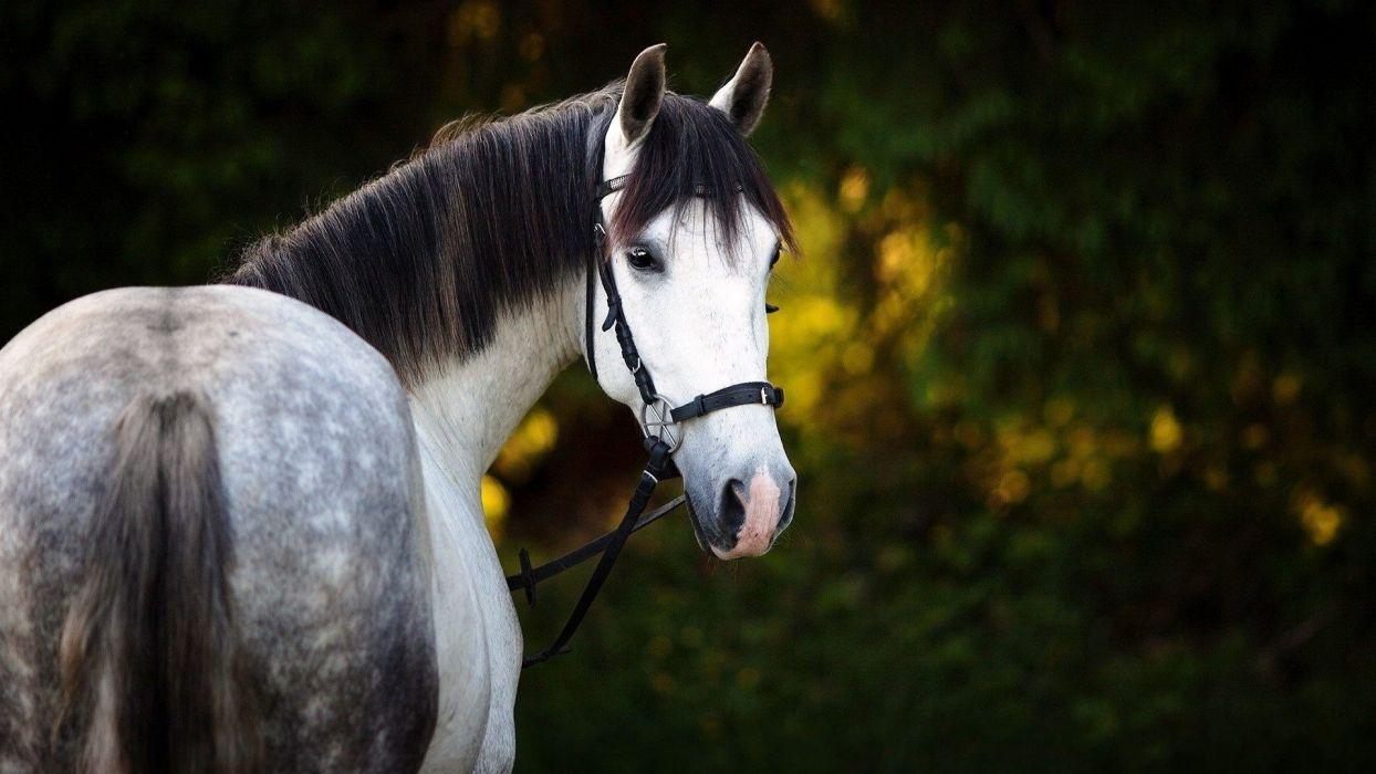 Beautiful horse see backside wallpaper