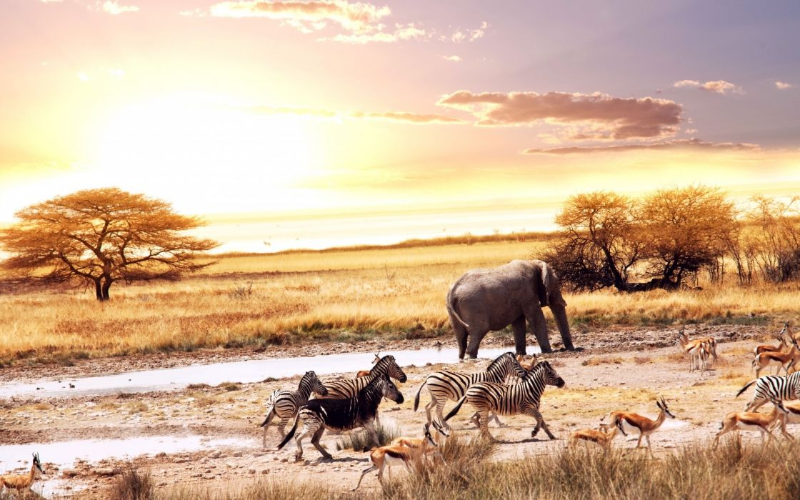 Africa animals forest area wallpaper