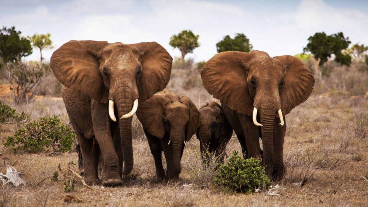 Elephants with baby beautiful animal wallpaper