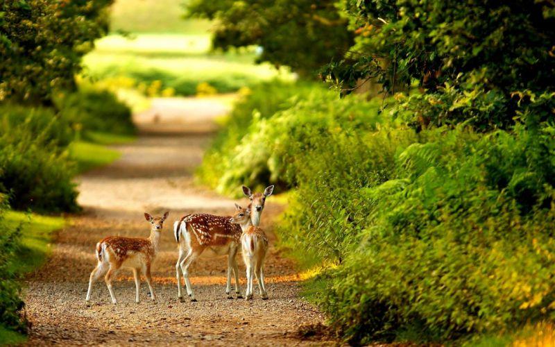 Deer in forest cute animal baby wallpaper