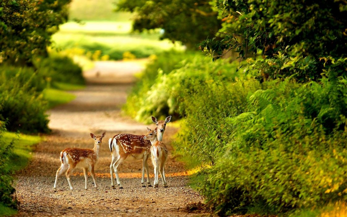 Deer in forest cute animal baby wallpaper