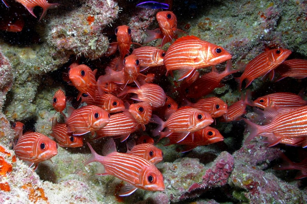 Fishes in deep sea marvelous swim red beautiful wallpaper