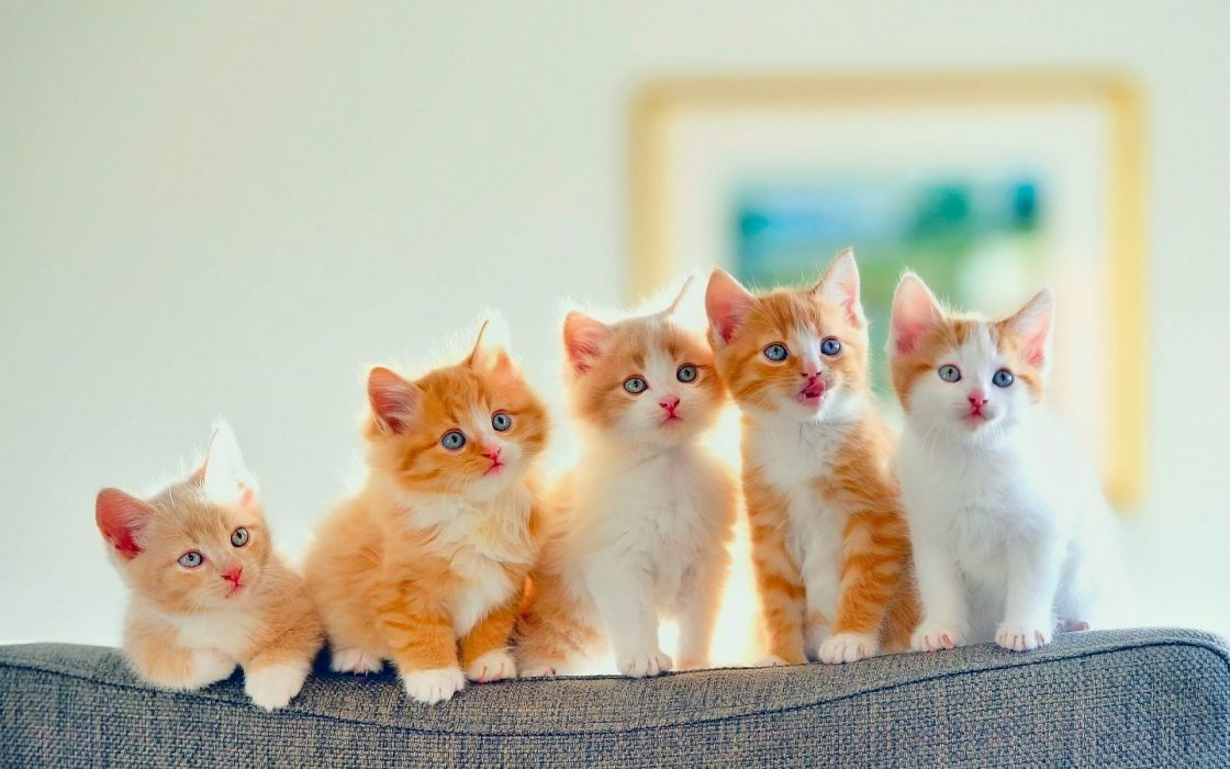Golden cute cats row wallpaper