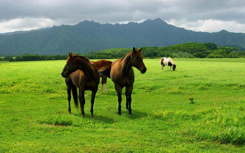 Grassing horse herd natural wallpaper