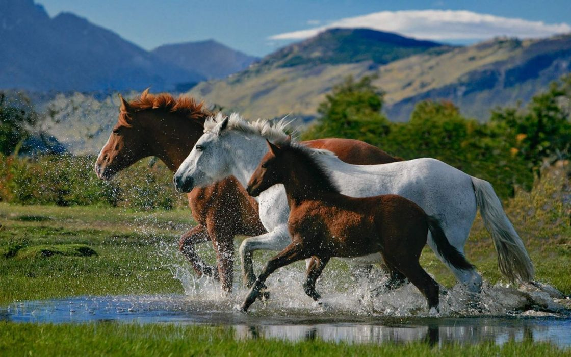 Horse Family Running Water Amazing Wallpaper 1920x1200 1084493 Wallpaperup