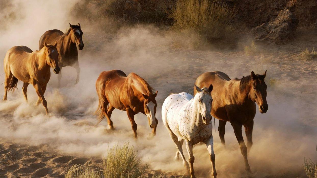 Horse herd amazing wallpaper