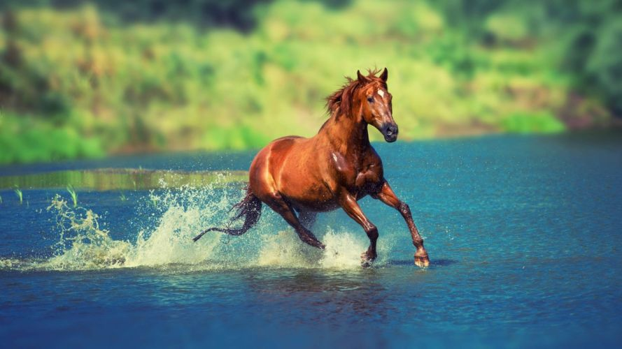 Running horse in water beautiful animal cute wallpaper