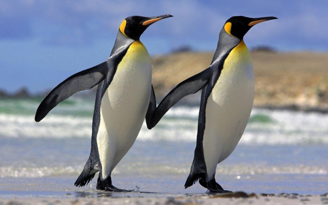 Penguin couple friendship love wallpaper