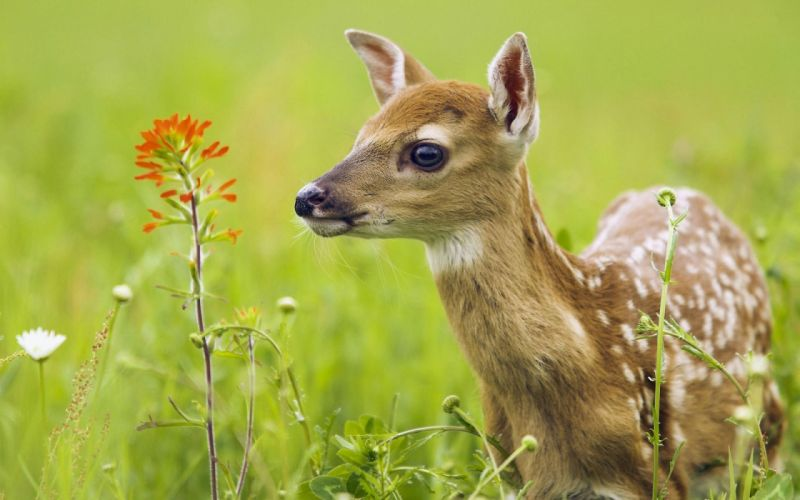 Sweet and small deer in forest wallpaper