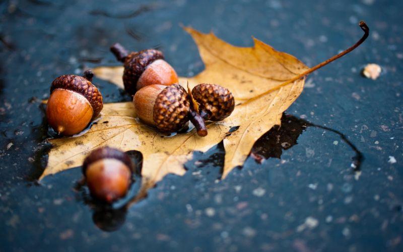 asphalt oak rain leaves autumn acorn puddle wallpaper