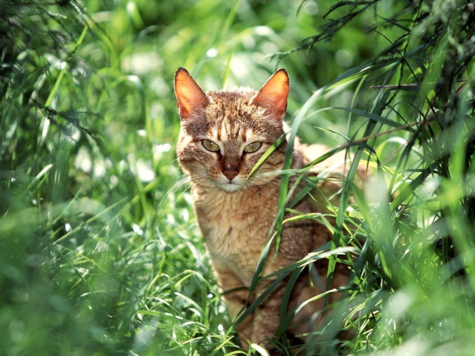 gato felino animales naturaleza wallpaper